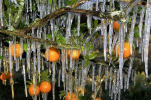Télen kertben narancs.