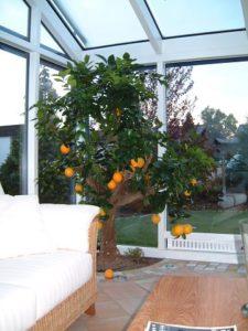 Narancs fa télikert