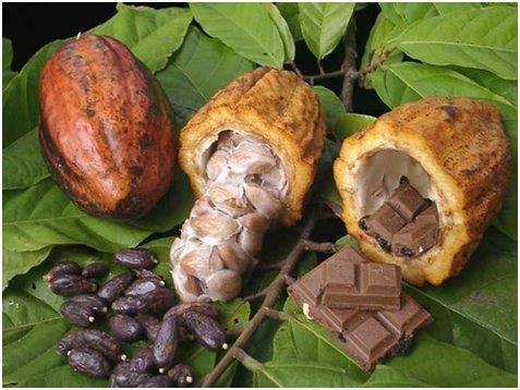 Kakaóbab csokoládé.