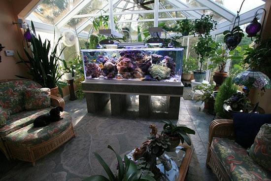Télikert és akvárium.