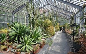 Növények a télikertben